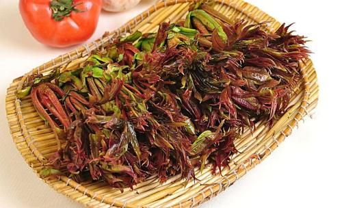 Poisonous and tasty: xiāng chūn are back at your local market!